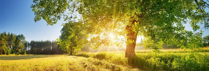 les significations de l'arbre de vie